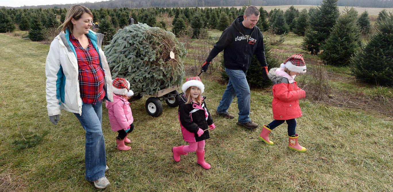 Juletræ fra Fædresgave