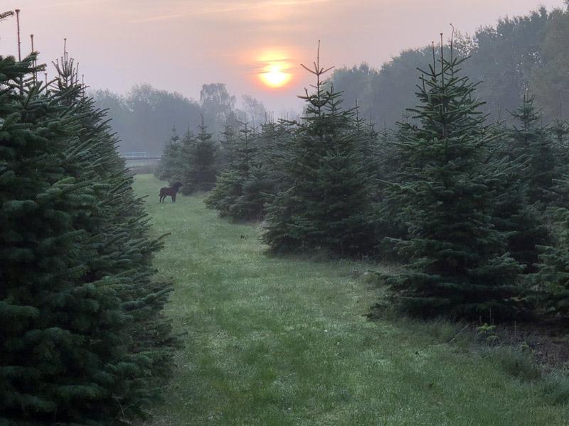 Fædresgave Juletræer